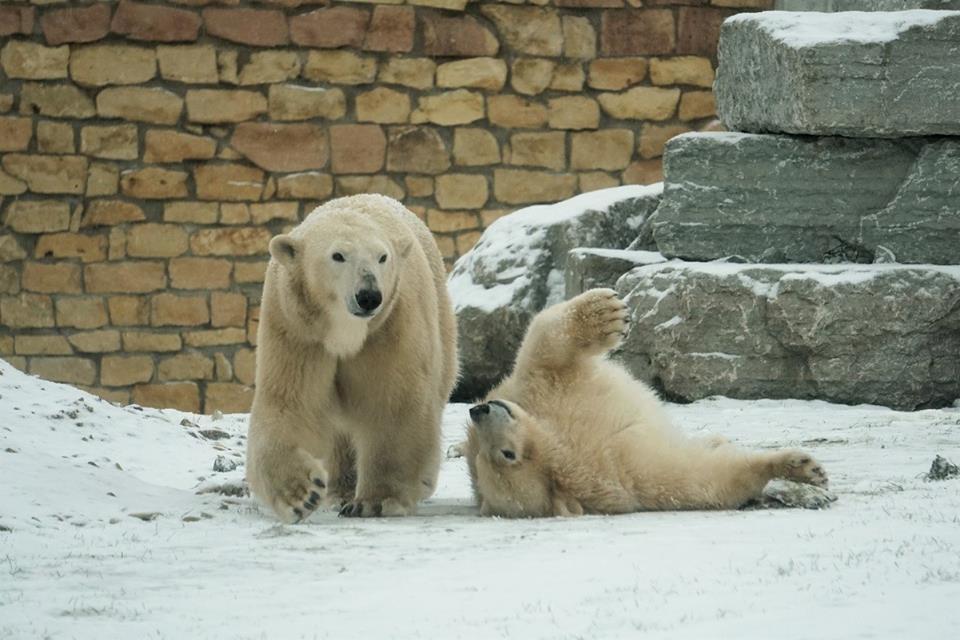 Pilt: Tallinna Loomaaed
