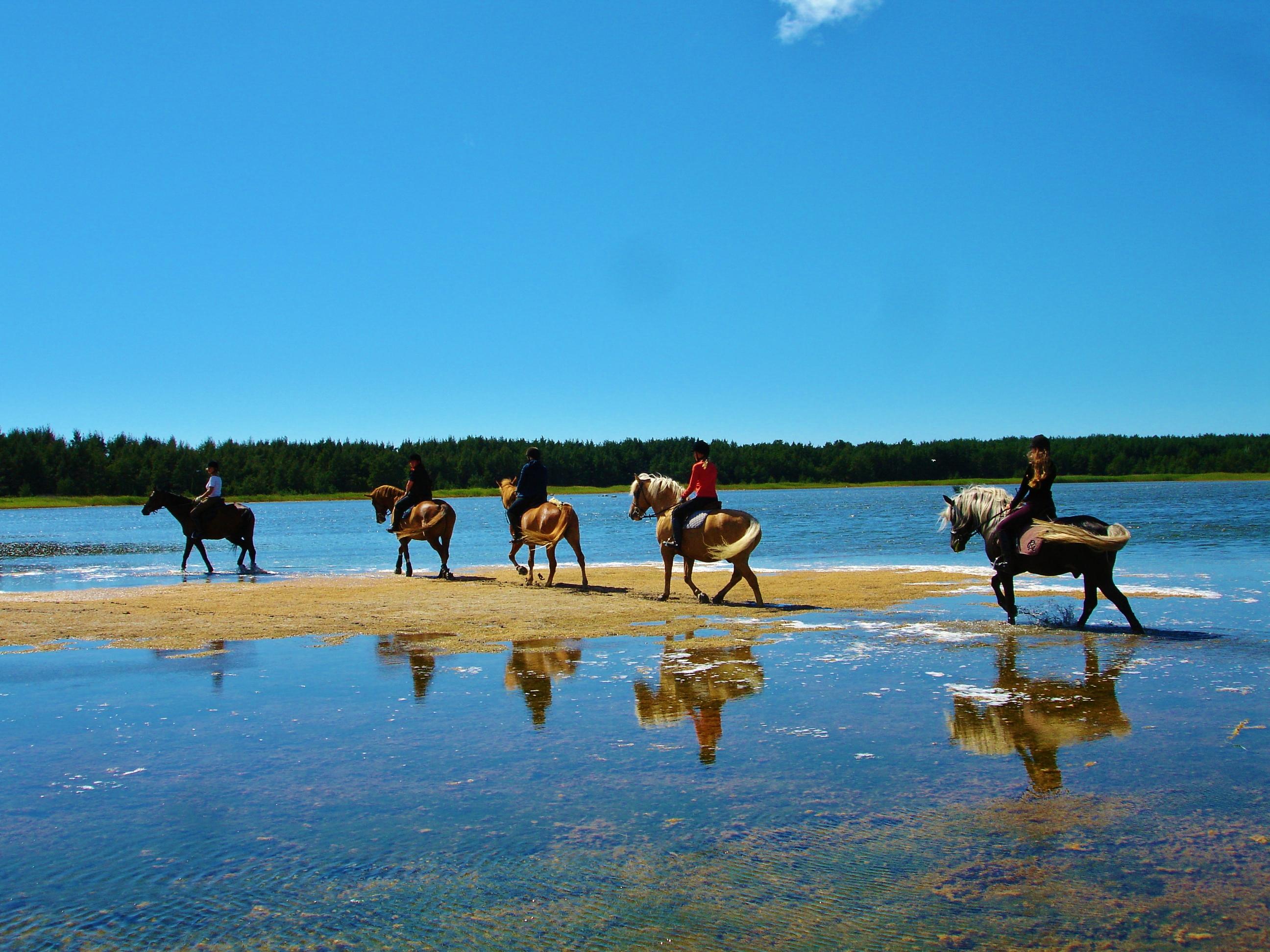 Hobusel on mõnus mööda madalaid merelahtesid kapata Foto: ratsukievari.ee